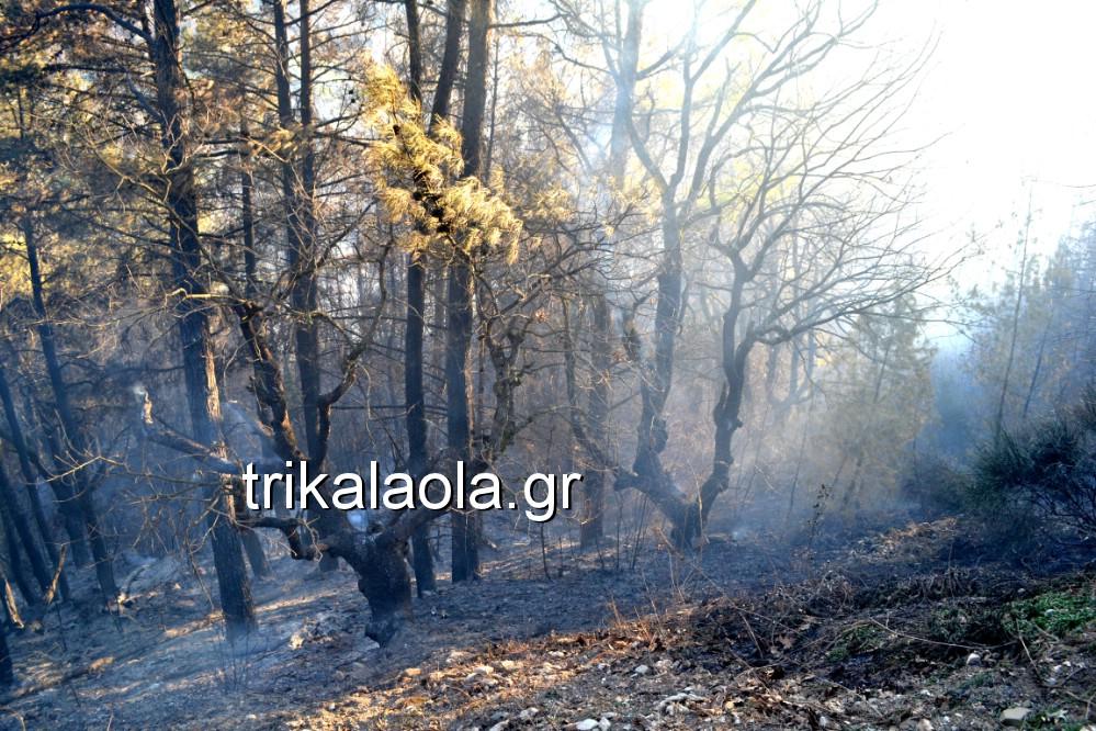 fotia loggies pylh trikalon 2019 12 - Μεγάλη καταστροφική φωτιά σε ορεινή περιοχή του δήμου Πύλης Τρικάλων.