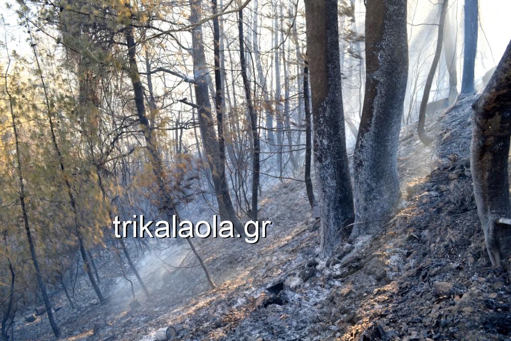fotia loggies pylh trikalon 2019 13 - Μεγάλη καταστροφική φωτιά σε ορεινή περιοχή του δήμου Πύλης Τρικάλων.