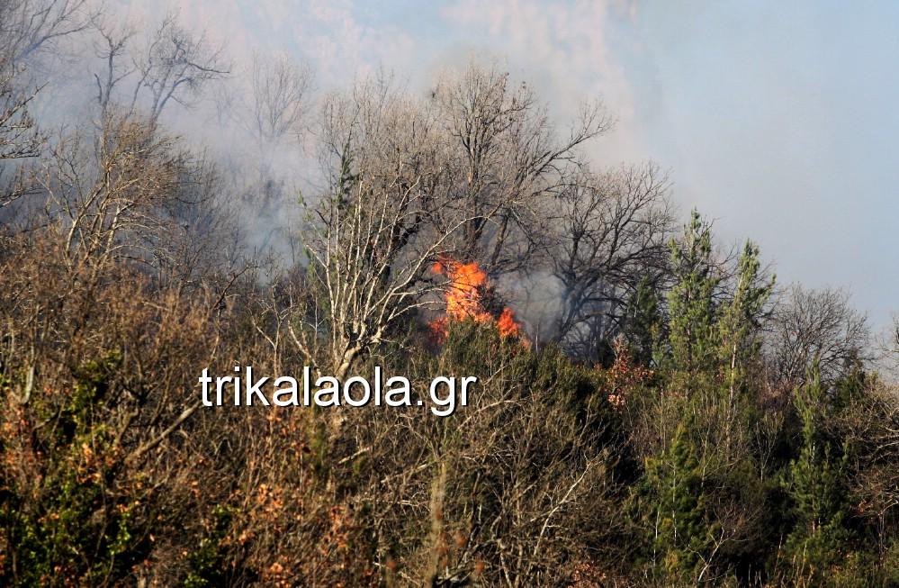 fotia loggies pylh trikalon 2019 23 - Μεγάλη καταστροφική φωτιά σε ορεινή περιοχή του δήμου Πύλης Τρικάλων.