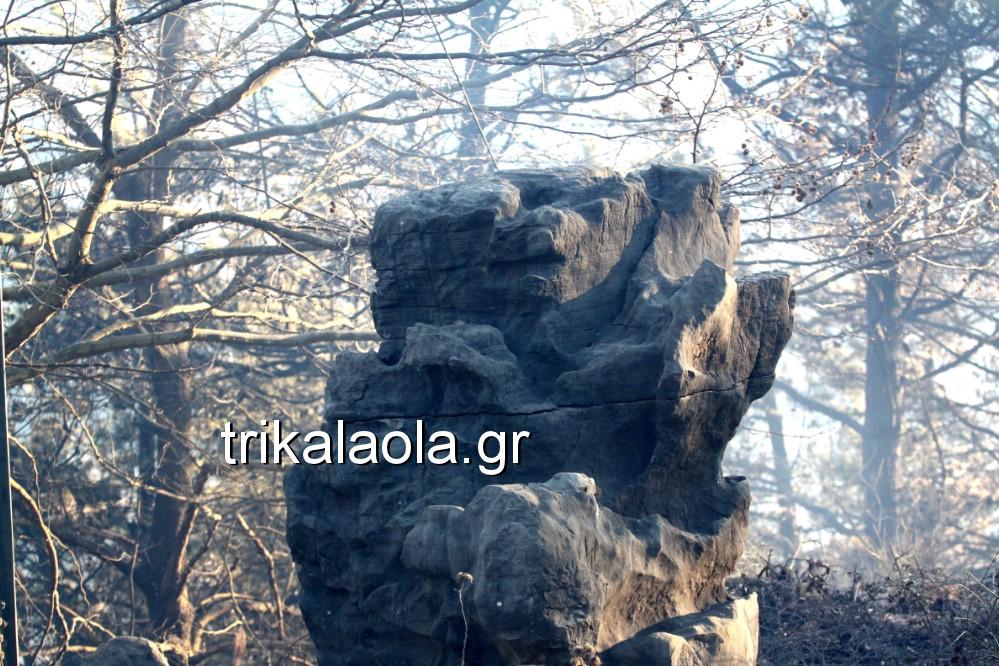 fotia loggies pylh trikalon 2019 33 - Μεγάλη καταστροφική φωτιά σε ορεινή περιοχή του δήμου Πύλης Τρικάλων.
