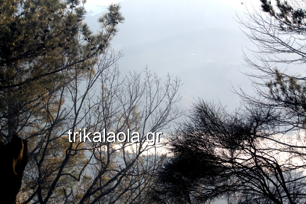fotia loggies pylh trikalon 2019 36 - Μεγάλη καταστροφική φωτιά σε ορεινή περιοχή του δήμου Πύλης Τρικάλων.