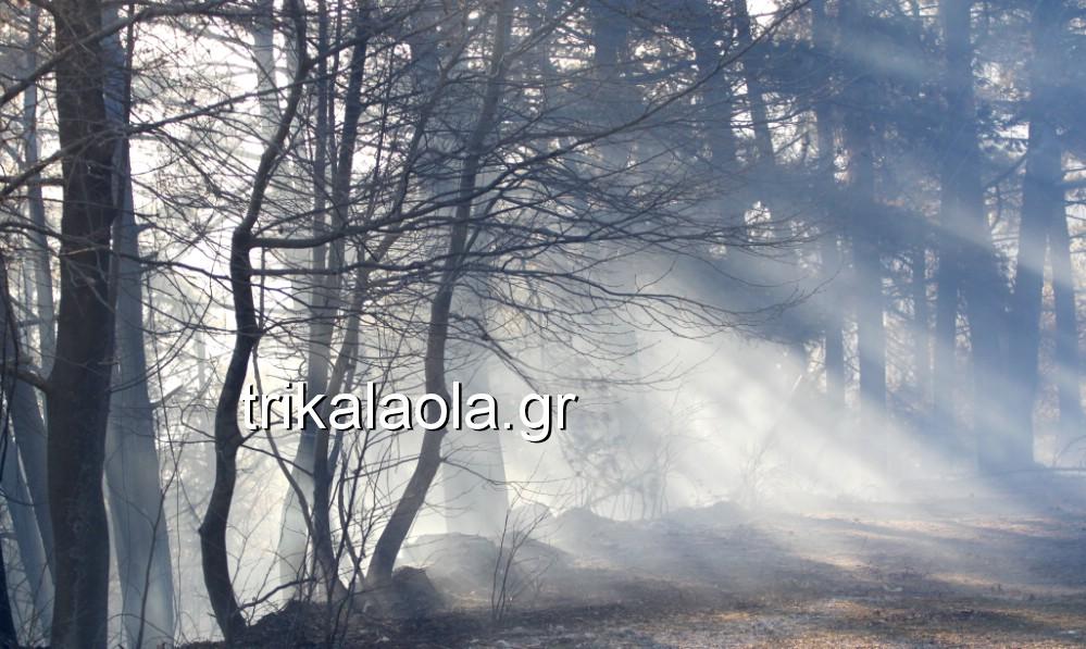 fotia loggies pylh trikalon 2019 38 - Μεγάλη καταστροφική φωτιά σε ορεινή περιοχή του δήμου Πύλης Τρικάλων.