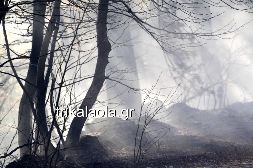 fotia loggies pylh trikalon 2019 39 - Μεγάλη καταστροφική φωτιά σε ορεινή περιοχή του δήμου Πύλης Τρικάλων.
